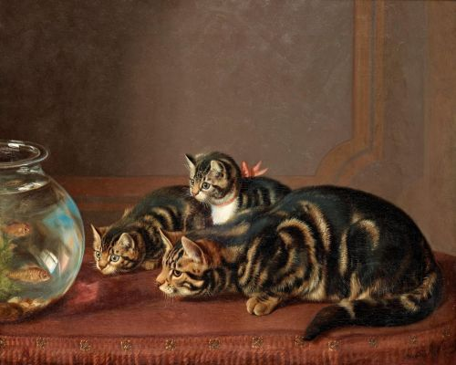 Cats Watching Fish In A Fishbowl