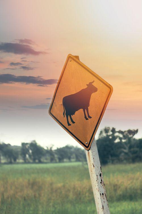 cattle livestock roadsign