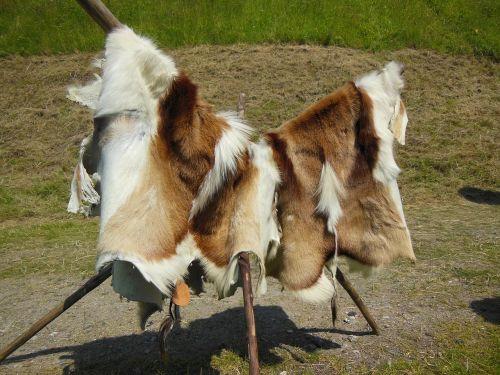 cattle hides fur furry