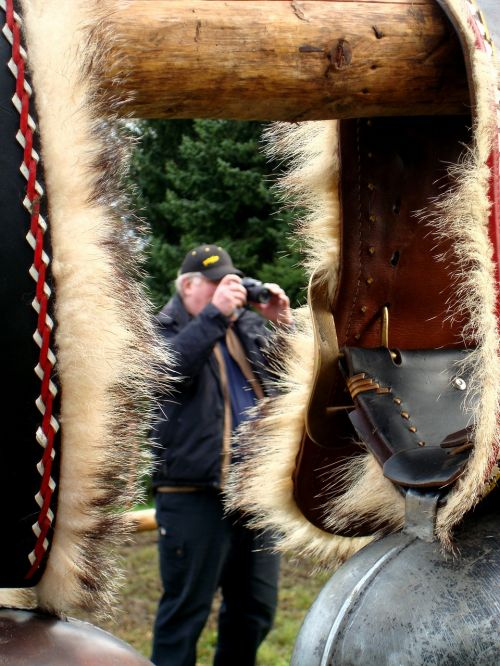 cattle show appenzell switzerland cow bells