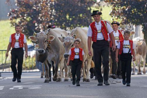 cattle show appenzell village