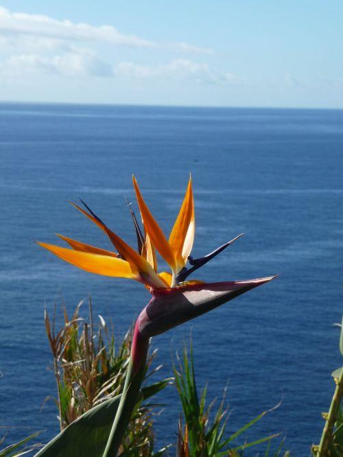 caudata strelitzia orchids caudata greenhouse