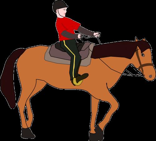 cavalier horseman equestrian