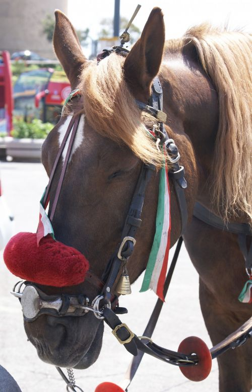 Horse Harnessed To Party