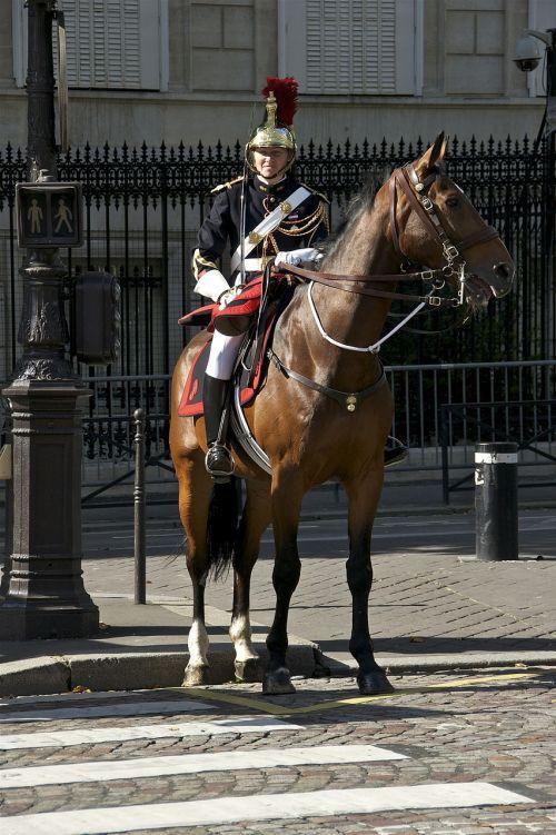 cavalry horse military