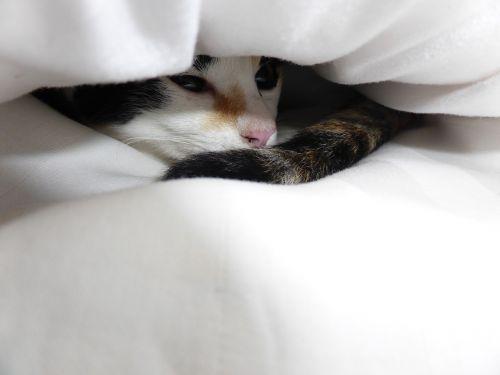 kitten black white