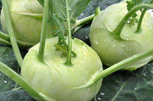 cavolorapa  kohlrabi  vegetables