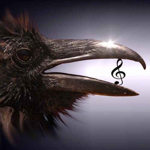 cd cover bird clef