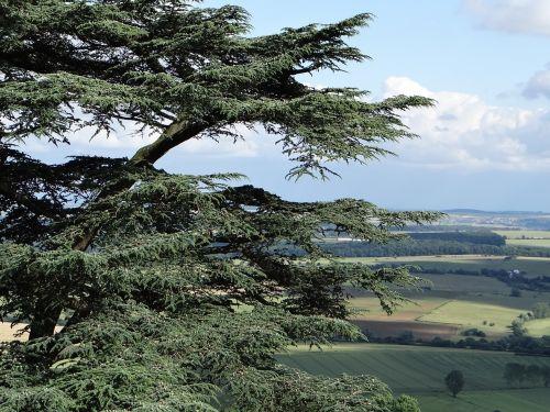 cedar balance sheet cedar tree