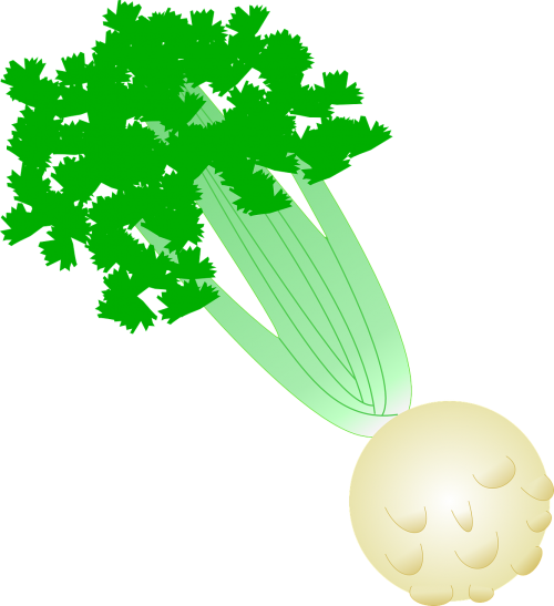 celeriac celery vegetable