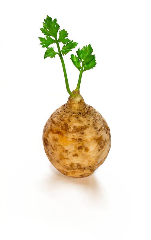celery vegetable food