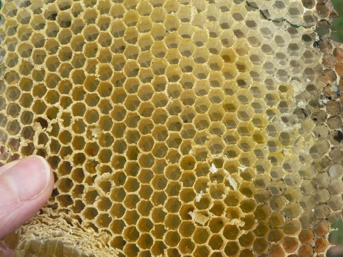 cell hive beekeeping