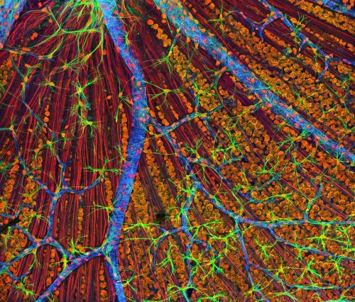 cells electron microscope macro