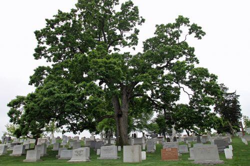 cemetery arlington national cemetery washington