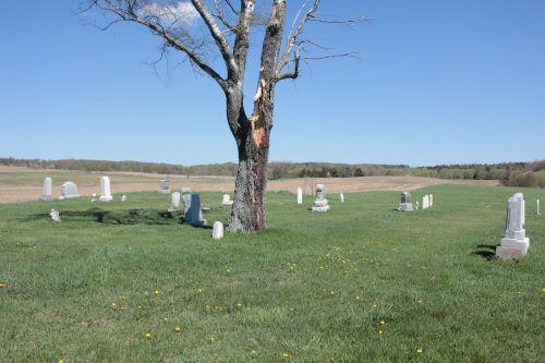 cemetery tree peaceful