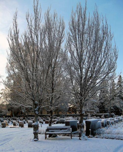 cemetery bench tree