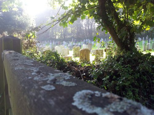 cemetery lichen graveyard