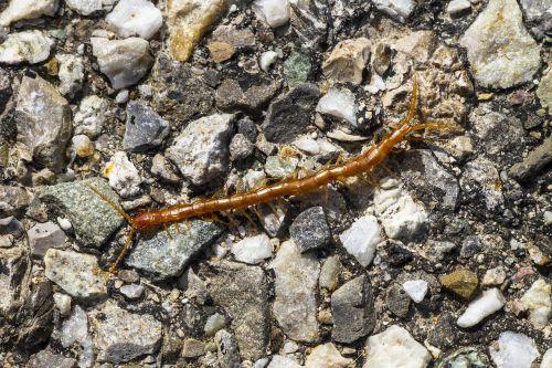 centipedes centipede member point kneeling