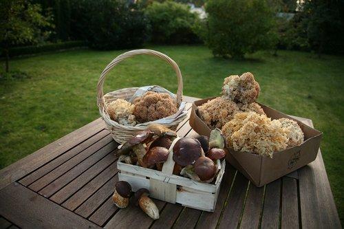 cep  chestnut  cauliflower mushroom