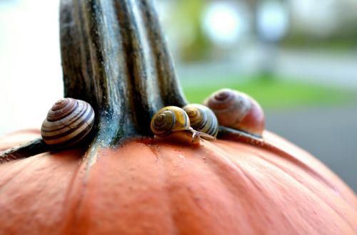cepaea snails snails pumpkin