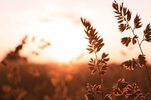 cereals sunrise landscape