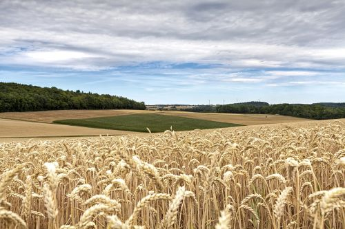 cereals arable field