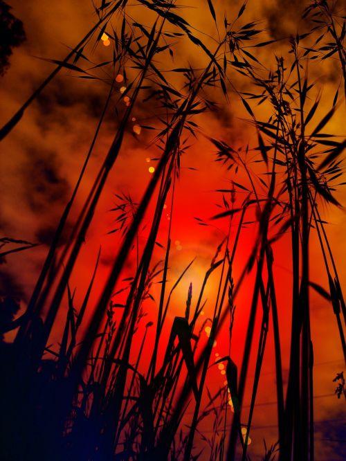 cereals sunset grasses