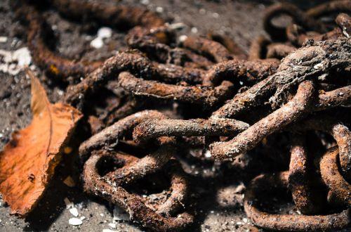 chain rust foliage