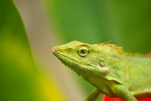 chameleon animals insect