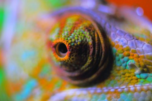 chameleon abstract chameleon reptile