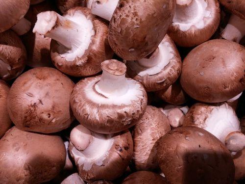 champion brown mushrooms