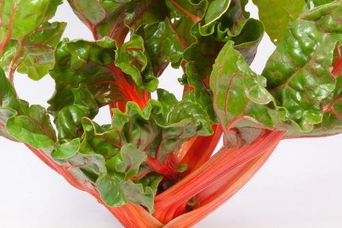 chard beta vulgaris herb stalk