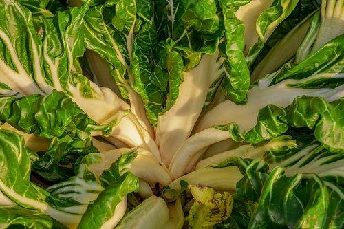 chard  beta vulgaris  vegetable plant