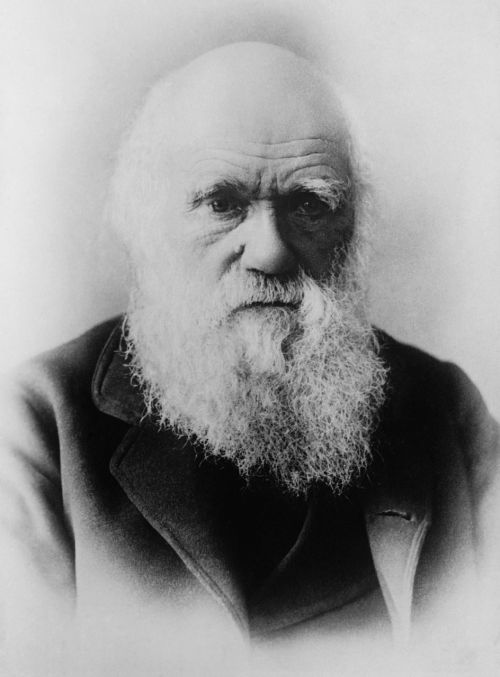charles darwin scientists theory of evolution