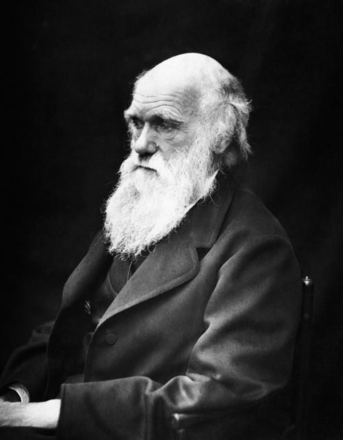 charles robert darwin scientists naturalist