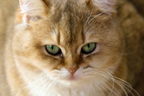 charming animals cat