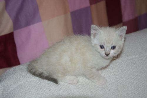 Cat Kitten, Pets,