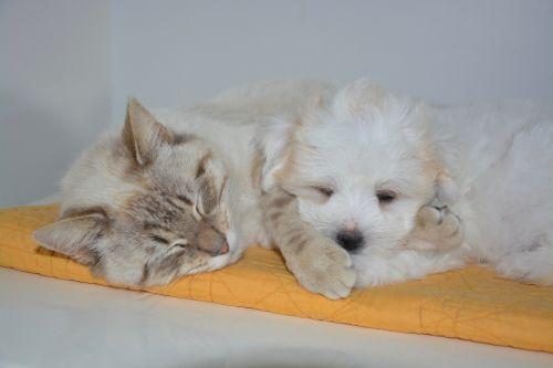 Cat Puppy Cuddly