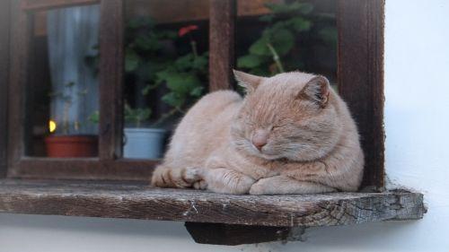 Cat, Sleeping,