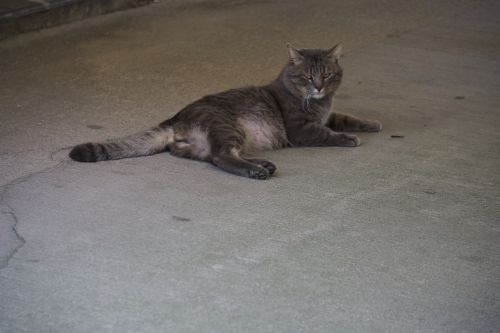 Tabby Cat On The Ground