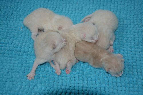 Sweet Cats Kittens