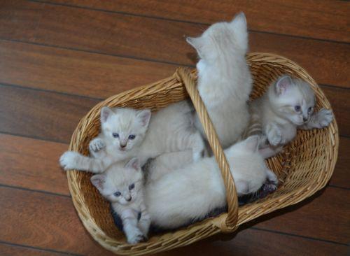 Kittens, Cats, Nature