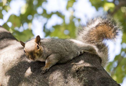 cheeky squirrel boston
