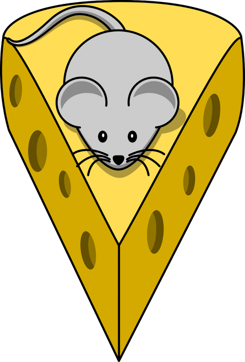 cheese mouse mammal