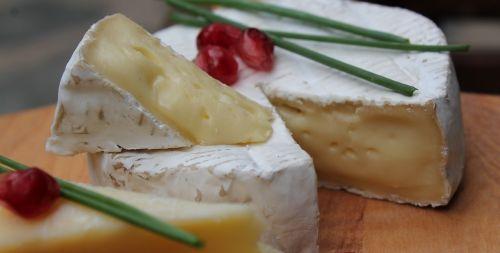 cheese camembert dairy