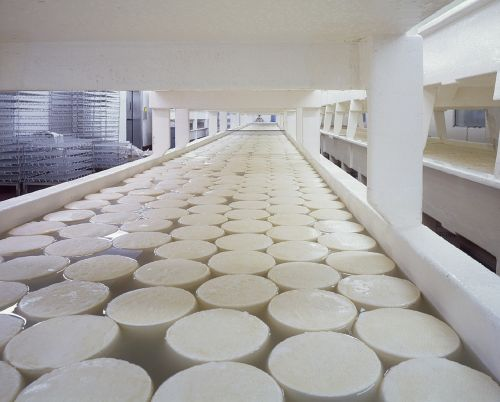 cheese dairy products curing
