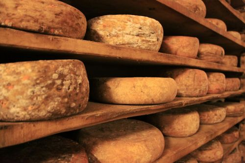 Cheese Ripening