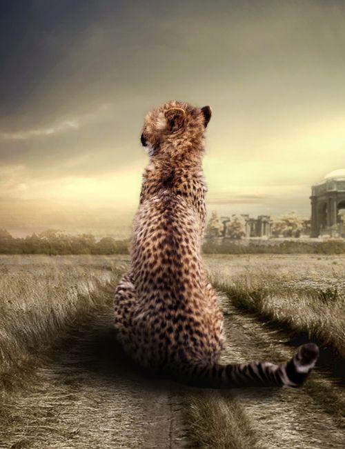 cheetah animal animal portrait