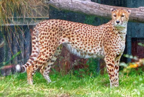 Cheetah Painting
