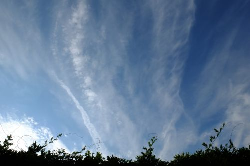 chemtrail conspiracy theory contrail